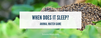 Animal Match Game When Does It Sleep
