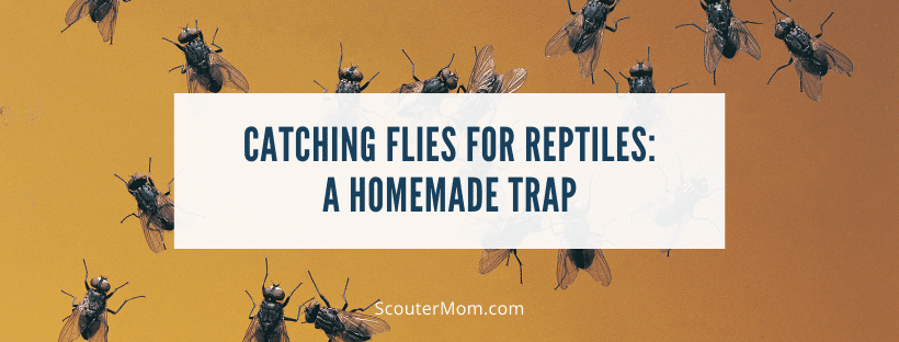 Catching Flies for Reptiles A Homemade Trap