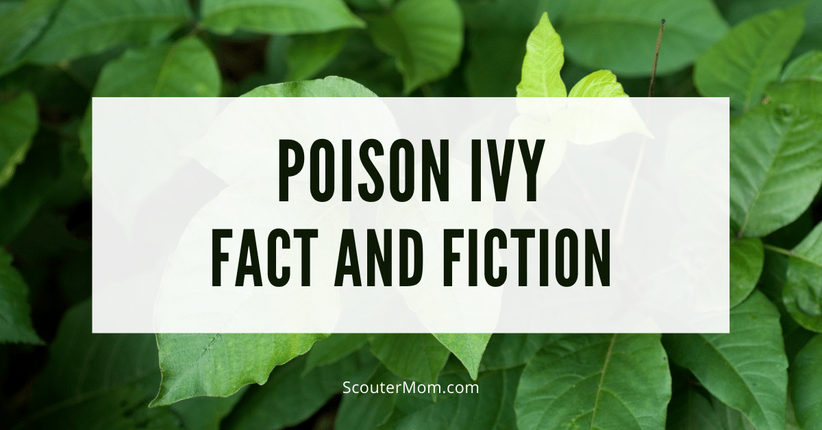 Poison Ivy Fact and Fiction