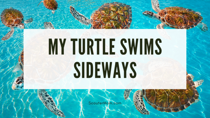"""The title """"My Turtle Swims Sideways"""" over an image of a group of turtles swimming in different directions in clear blue water."""
