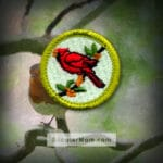 Bird Study Merit Badge for Boy Scouts