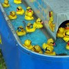 A carnival game of duck pond as ducks go swiming by.
