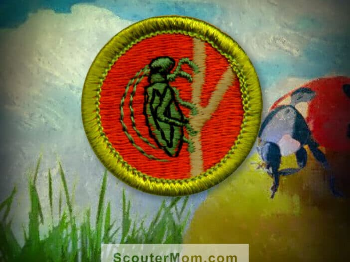Insect Study Merit Badge for Boy Scouts